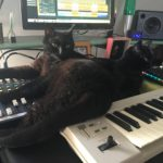 chat sur un clavier